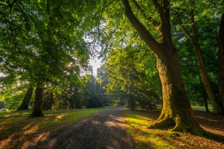 Photo for Sunbeams passing through the leaves of trees in the spring park - Royalty Free Image