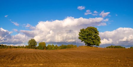 Photo for Scenic view of trees in plowed field at autumn - Royalty Free Image