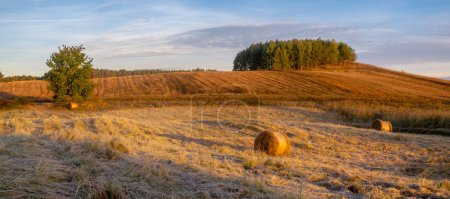 Photo for Scenic view of fields and meadows at sunny morning - Royalty Free Image