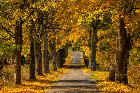 Photo for Autumn landscape road with colorful trees . Bright and vivid autumn foliage with country road - Royalty Free Image