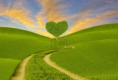 Photo for Green heart-shaped tree on a spring meadow - Royalty Free Image