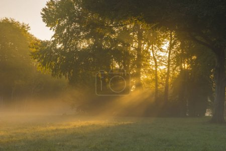 Photo for Beautiful misty and sunny morning in the park - Royalty Free Image