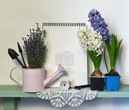 Photo pour Jacinthe et lavande avec arrosoir, outils de jardinage et note vierge sur étagère, nature morte. Fond nature vintage avec fleurs fleuries à l'intérieur - image libre de droit