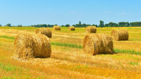 Rural countryside with haystacks.