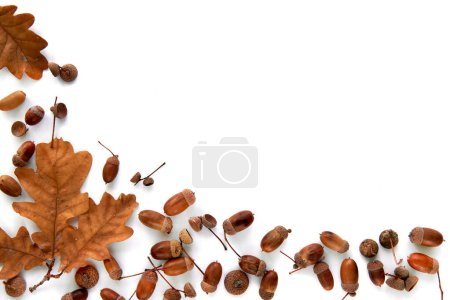 Photo for Autumn composition. Frame made of brown dried leaves and acorns isolated on white background. Template mockup fall, halloween, harvest thanksgiving concept. Flat lay, top view, copy space background. - Royalty Free Image