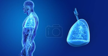 Colorful medical illustration of human body and lungs