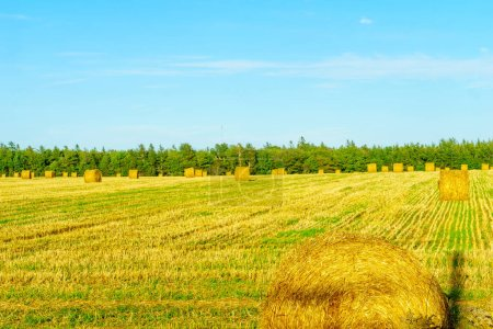 View of countryside and haystacks near Borden-Carleton, Prince Edward Island, Canada