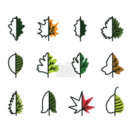 A collection of leaves illustration.