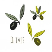 Olives Vector icon Hand drawn illustration Sticker label design