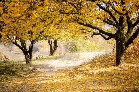 Photo pour Paysage en automne dans le parc. Automne doré aux feuilles jaunes - image libre de droit
