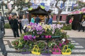 the flower market and market street at the avenida Arriaga at the Festa da Flor or Spring Flower Festival in the city of Funchal on the Island of Madeira in the Atlantic Ocean of Portugal.  Madeira, Funchal, April, 2018