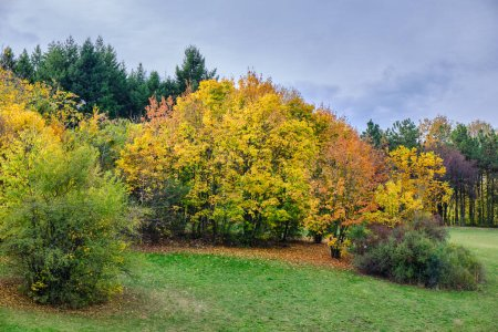 """Photo for Autumn leaves and trees foliage in Kosutnjak park forest in Belgrade, the capital of Serbia, colloquially called """"Belgrade oxygen factory"""" - Royalty Free Image"""