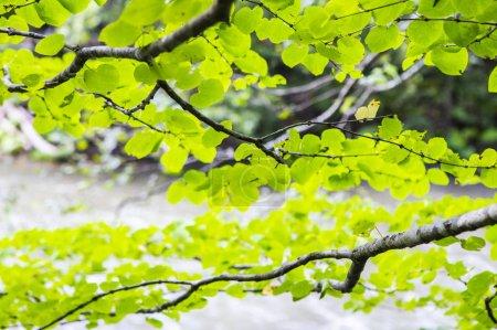 Photo pour Gros plan nature fond avec des feuilles vertes - image libre de droit