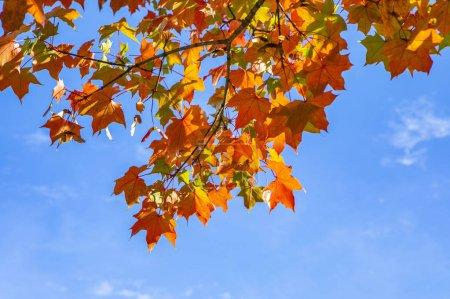 Photo for Season of beautiful autumn leaves - Royalty Free Image
