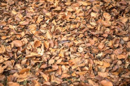 Photo pour Saison de belles feuilles d'automne - image libre de droit