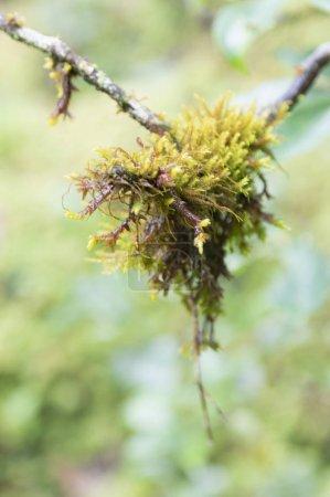 Photo pour Plantes vertes fraîches, forêt nature - image libre de droit