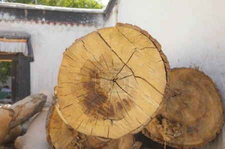 Photo pour Grumes en bois dans le jardin - image libre de droit