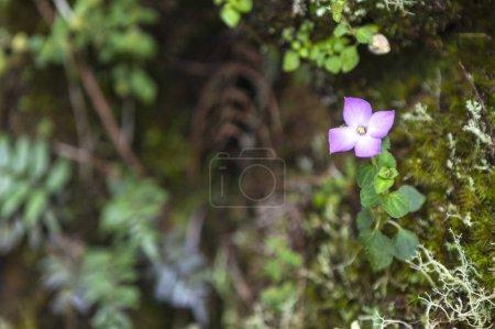 Photo pour Belle fleur violette dans la forêt - image libre de droit