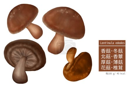 Photo pour Ensemble d'illustrations de champignons - image libre de droit