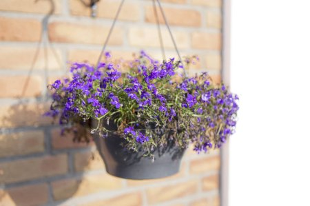 Photo for Bouquet of purple flowers hanging on pot - Royalty Free Image