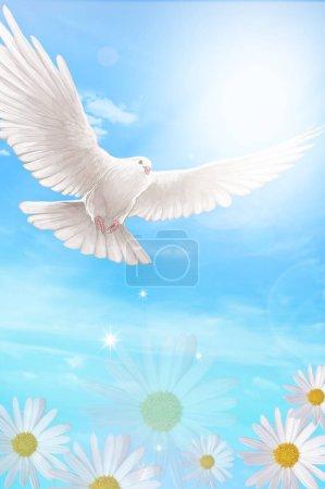 Photo pour Colombe volant dans le ciel - image libre de droit