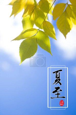 Photo pour Carte avec hiéroglyphes chinois et feuilles vertes sur fond bleu ciel - image libre de droit