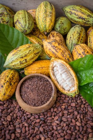 Ripe cocoa pod and nibs, cocoa beans setup backgro...