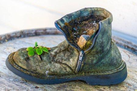 Photo pour Vieille botte et petite plante verte en croissance - image libre de droit