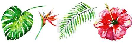 Photo pour Belles fleurs rouges, feuilles de palmier, aquarelle sur un blanc - image libre de droit