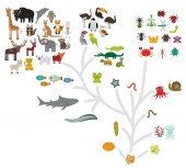 Evolution scale from unicellular organism to mammals Evolution in biology scheme evolution of animals isolated on white background children's education science Vector illustration