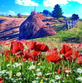 The charming landscape with poppies and daisies on a background of haystack