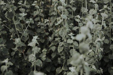 Gros plan de fleurs sauvages-feuilles