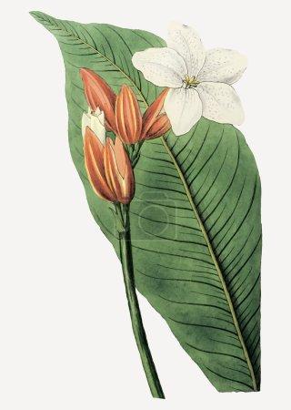 Photo for Vintage Brasilian red-coat flower branch for decoration - Royalty Free Image