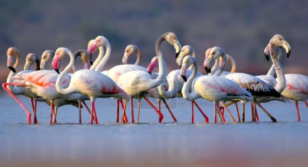 These famous pink birds can be found in warm, watery regions on many continents. They favor environments like estuaries and saline or alkaline lakes.