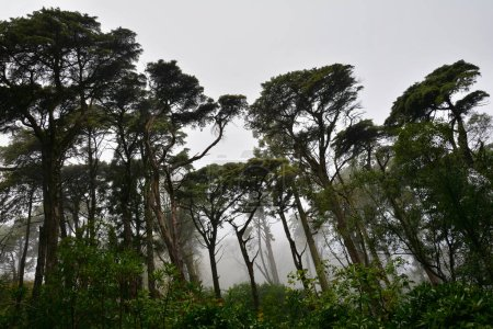 Photo pour Arbres dans la forêt par temps nuageux - image libre de droit