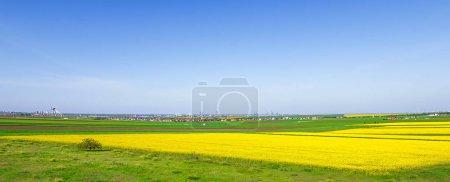 Foto de Campos coloridos en primavera. Paisaje rural rumano con campos de colza y trigo. - Imagen libre de derechos