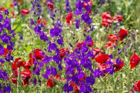 Foto de Hermosas flores silvestres en verano - Imagen libre de derechos