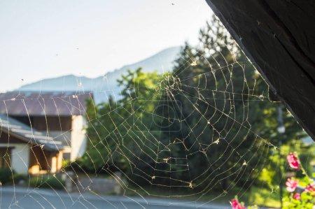 Photo pour Toile d'araignée le matin dans les Alpes - image libre de droit