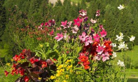 Foto de Jardín floral en un pueblo de montaña - Imagen libre de derechos
