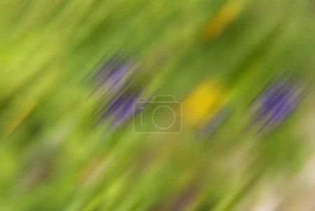 Foto de Tema verde . Fondo de la naturaleza. Desenfoque de movimiento. - Imagen libre de derechos
