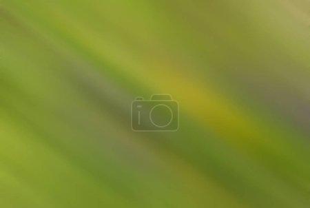 Foto de Green theme .Nature background. Motion blur. - Imagen libre de derechos