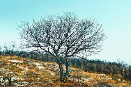 Photo pour Paysage froid à Dobrogea Gorge Reserve, Roumanie - image libre de droit