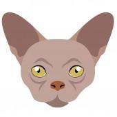 Donskoy cat avatar Cat breeds