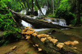 The freshness and beauty of nature at Pha Sawan Waterfall The most popular tourist attractions in Kanchanaburi, Thailand