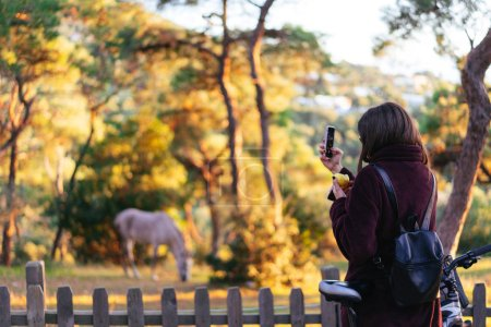 Photo for Girl takes pictures of a horse on a smartphone - Royalty Free Image
