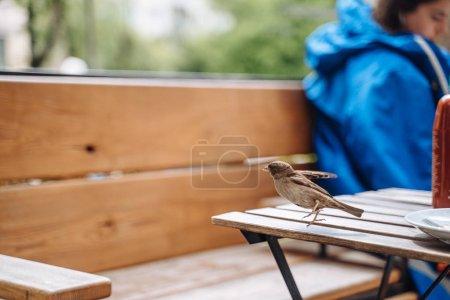 Photo pour Oiseau en ville. Sparrow assis sur la table dans un café extérieur, vue rapprochée - image libre de droit