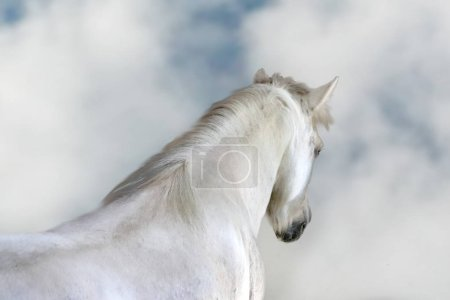 White horse with dreaming cloudy sky photo