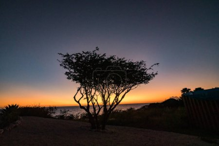 Photo for Silhouette of a tree on beach during sunset - Royalty Free Image