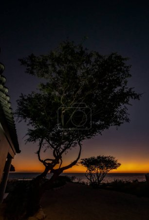 Photo for Silhouette of a tree with a sunset - Royalty Free Image