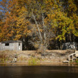 Beautifull autumn on the river with warm autumn at...
